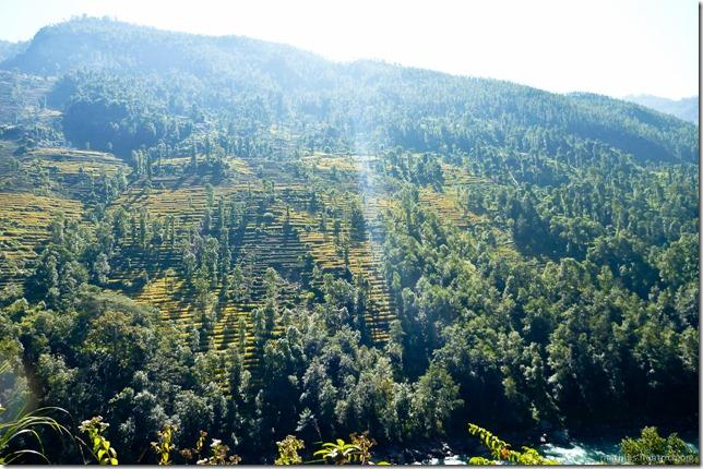 101106_P1020492_Nepal, nach Kathmandu, unterwegs, Ausblick, Wald