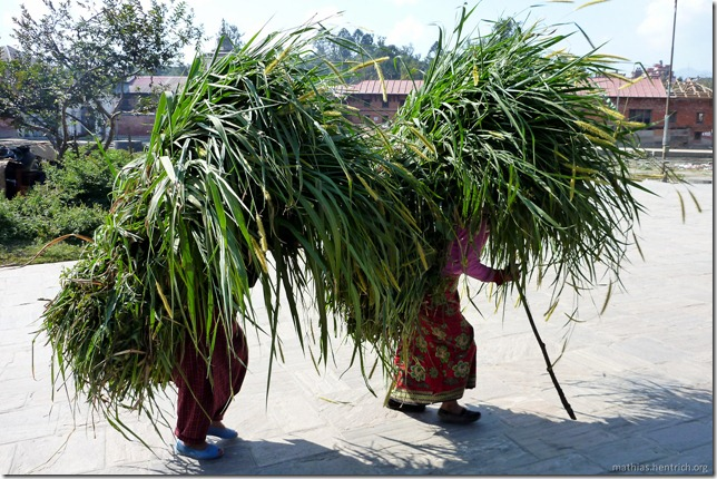 101111_P1020637_Nepal, Kathmandu, Pashupatinath Krematorium, Gras-Lastenträger-Frauen