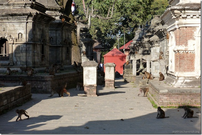 101111_P1020693_Nepal, Kathmandu, nach Boudhanath-Pagode, Tempelanlage, Affen