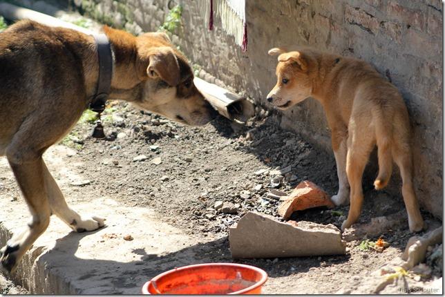101111_TS-IMG_2840_Nepal, Kathmandu, Thamel, Straßenhunde