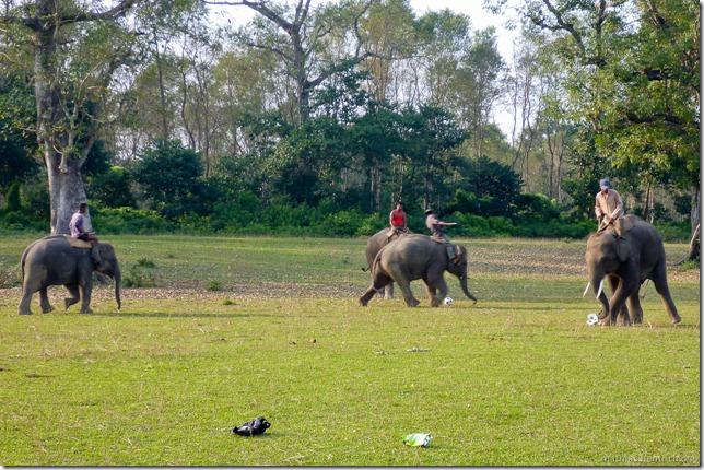 101112_P1020737_Nepal, Chitwan Nationalpark, vor Dschungel, Elefanten-Fussball