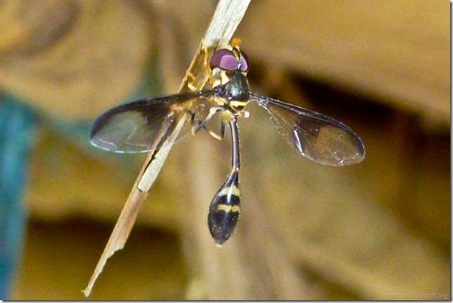 101113_P1020797_Nepal, Chitwan Nationalpark, Unterkunft, Insekt