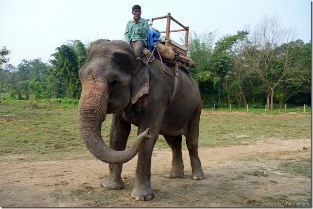 101113_P1020810_Nepal, Chitwan Nationalpark, Dschungel-Elefantensafari, unser Elefant