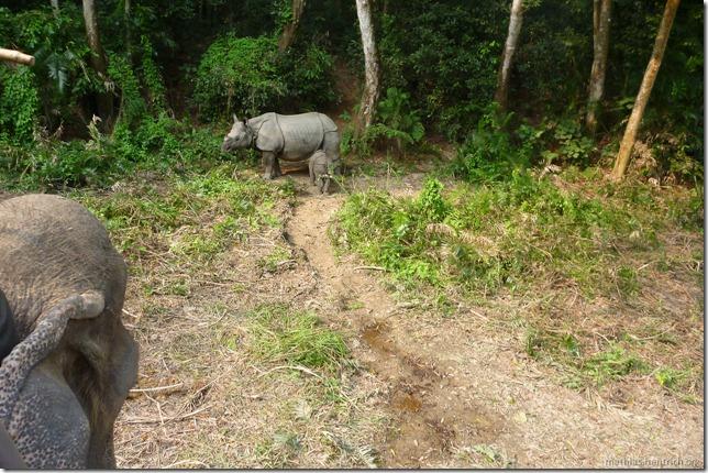 101113_P1020834_Nepal, Chitwan Nationalpark, Dschungel-Elefantensafari, Rhinos, Elefantenkopf