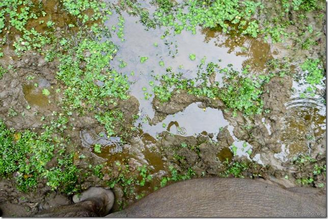 101113_P1020855_Nepal, Chitwan Nationalpark, Dschungel-Elefantensafari, Schlamm