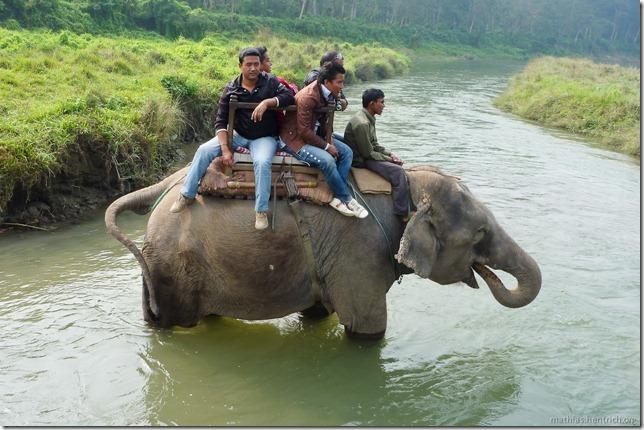 101113_P1020860_Nepal, Chitwan Nationalpark, Dschungel-Elefantensafari, Elefantenbad