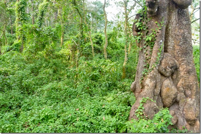 101113_P1020870_Nepal, Chitwan Nationalpark, Dschungel-Elefantensafari, Dschungel