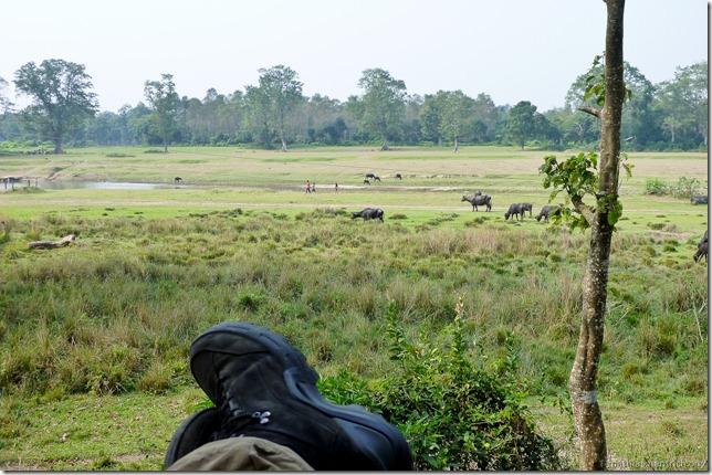 101113_P1020891_Nepal, Chitwan Nationalpark, Unterkunft, Ausblick