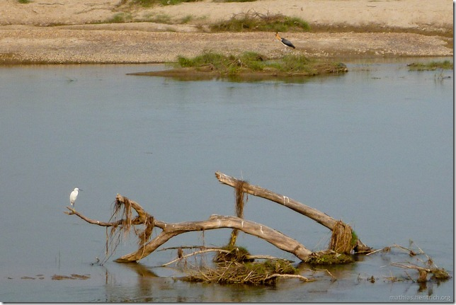 101113_P1020909_Nepal, Chitwan Nationalpark, Jeeptour, Vögel