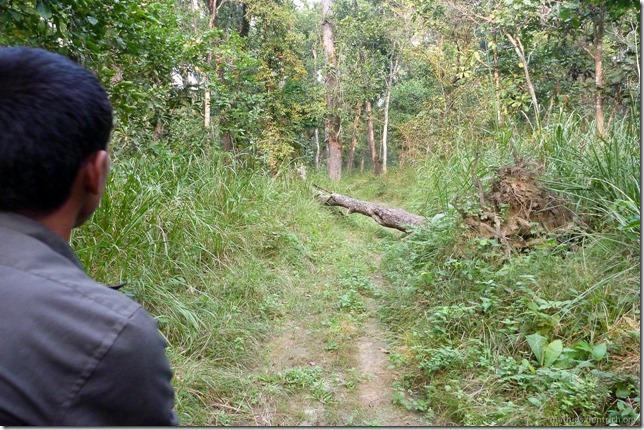 101113_P1020912_Nepal, Chitwan Nationalpark, Jeeptour, versperrter Weg