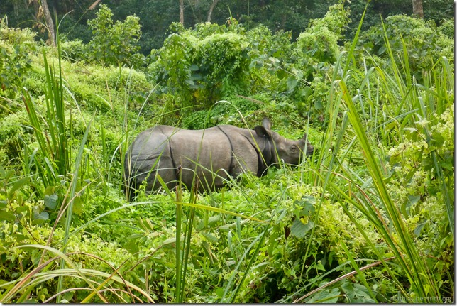 101113_P1020935_Nepal, Chitwan Nationalpark, Jeeptour, Rhinozeros
