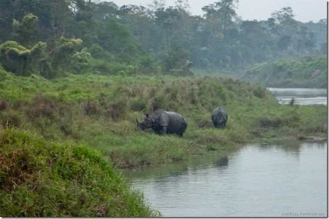 101113_P1020971_Nepal, Chitwan Nationalpark, nach Jeeptour, Rhinos